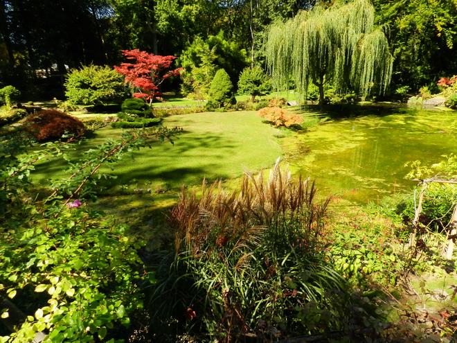 Jardin japonais 3 la r gion parisienne le bassin for Jardin en france