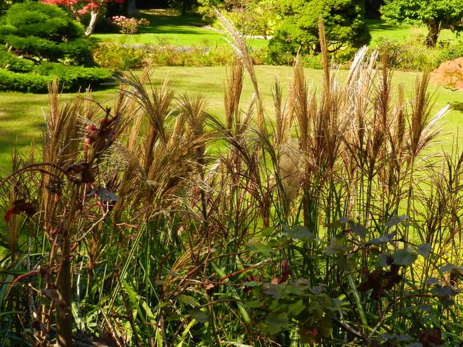 Jardin japonais 3 la r gion parisienne le bassin for Japonais rambouillet